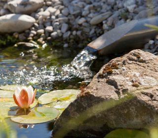Seerosen mit Wasserlauf