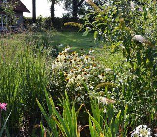 Vielseitige Bepflanzung im Garten