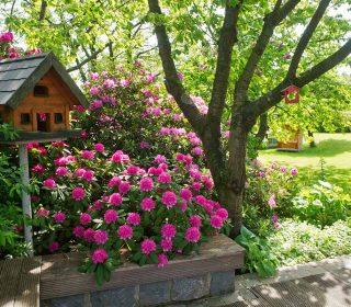 Blumen mit Vogelhaus
