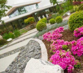 Steinweg und Blüten