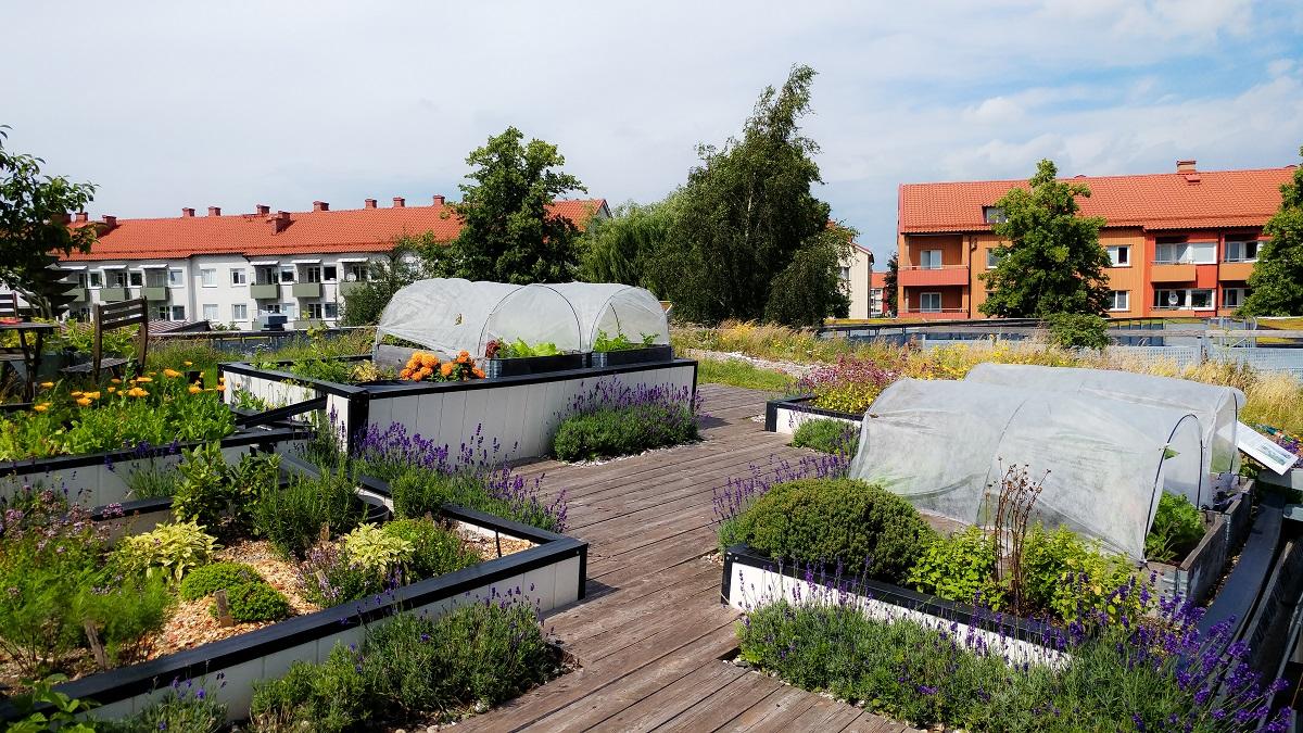 Urbaner Garten auf einem Dach